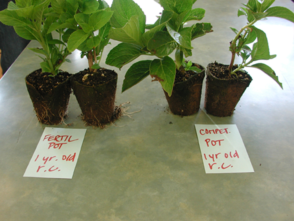 Fertilpot vs Peat pot