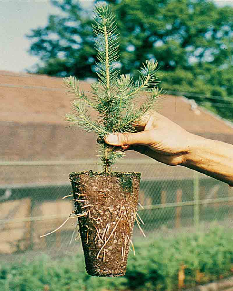 Fertilpot used in forestry cultivation