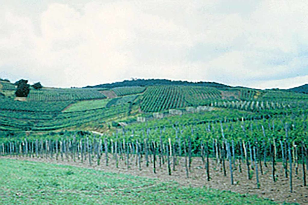 Picture of vineyard that uses Fertilpots